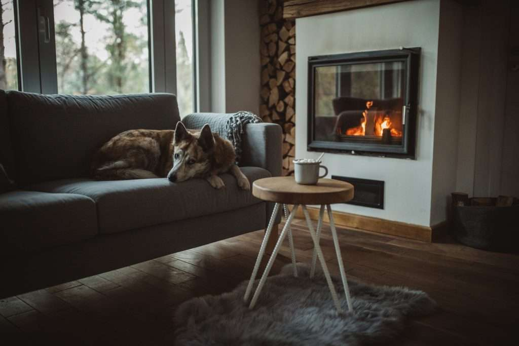 Make Home Comfortable for Dog