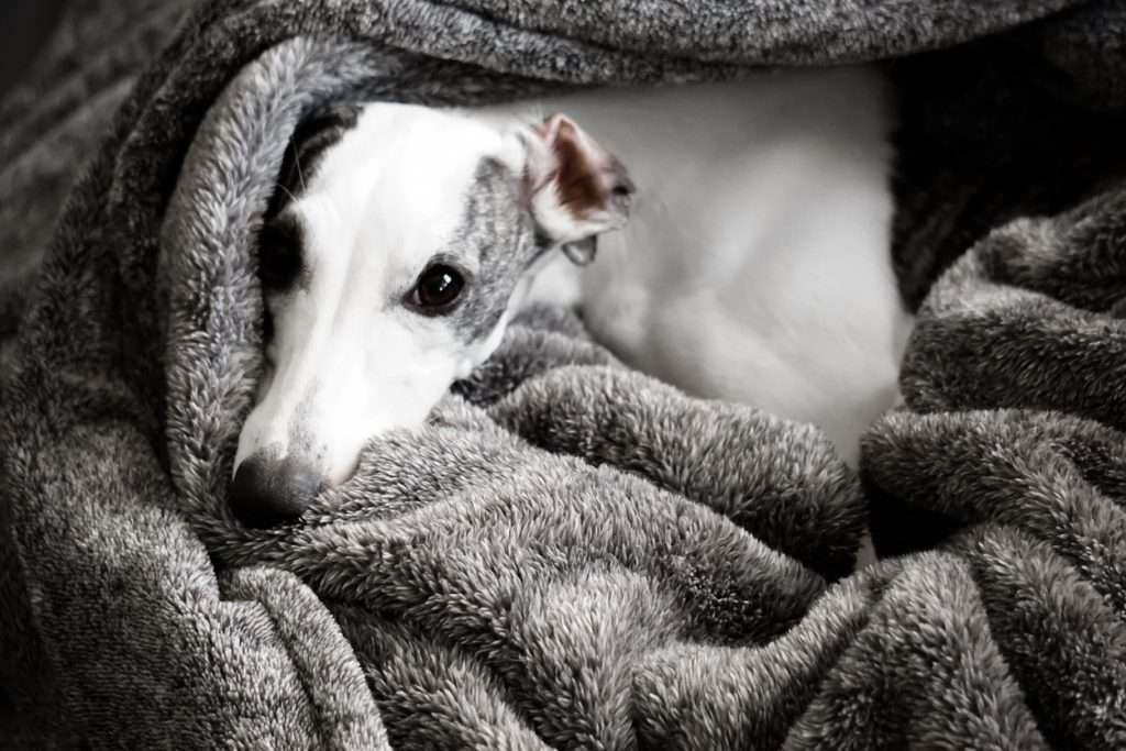 What Are the Signs of Kennel Cough