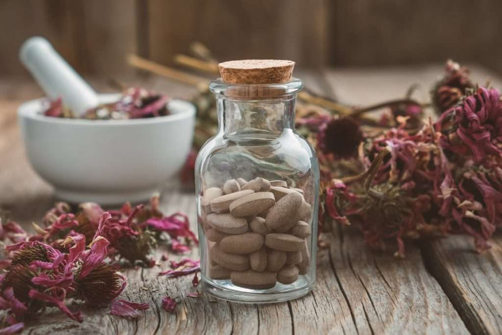 Echinacea for Dogs