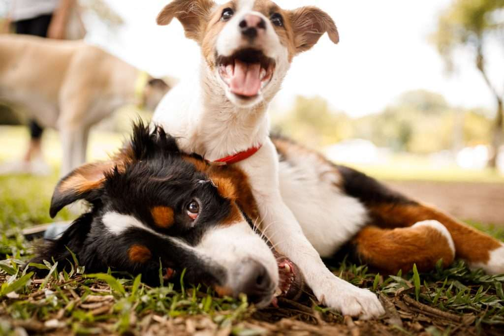 Common Places Dogs Contract Kennel Cough
