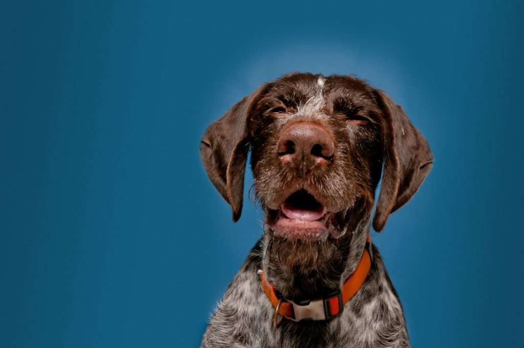 Early Signs of Kennel Cough - Sneezing