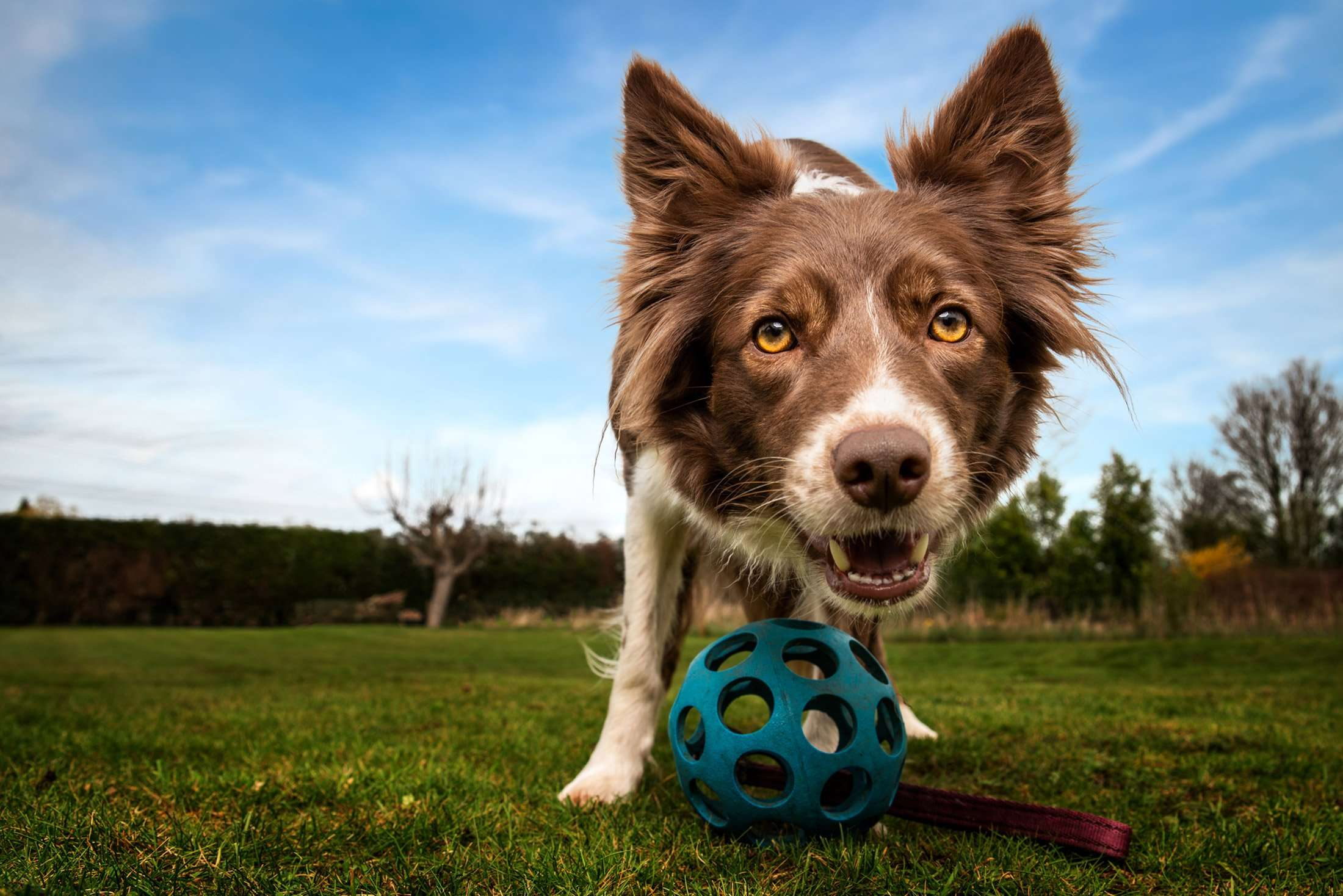 Signs of Kennel Cough in Dogs – 6 Key Things to Watch Out For